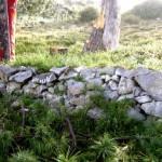 grave on Kassi