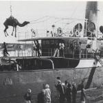 Camel on ship