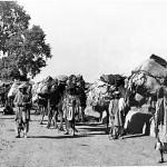 afghan caravan at khyber 1920