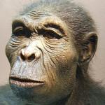 Homo_habilis